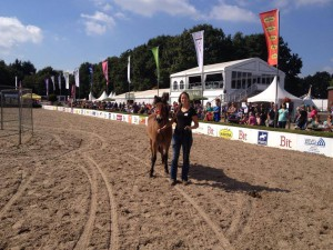 mas horse event 3