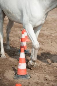 paard pionen