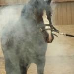paard rookmachine