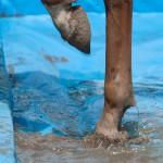 paard voeten waterbak