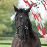 paard zwart sliert gordijn